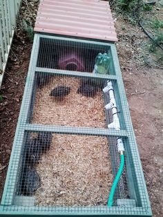 Quail Pen and all things Quail - Watering system my husband made after I found this… - Homesteading Today Quail Pen, Quail Coop, Chicken Coup, Chicken Coop Plans, Farm Chicken, Chicken Chick, Raising Quail, Raising Chickens, Quail House
