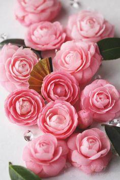 Virgin Camellia 乙女椿と金の扇