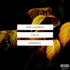 #negroirregular #quote #frase #frasedeldia