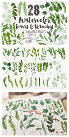 28 Watercolor Branches and Leaves