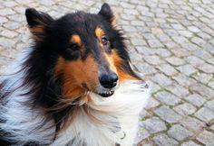 ¿Quieres saber lo que piensa tu mascota? ¡Pronto podrás saberlo! #Entretenimiento