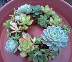 You can plant succulents anywhere. Here: a ring of them.