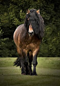 beautiful horse draft horse Brown Horse by ~EmmiCarlsson on deviantART All The Pretty Horses, Beautiful Horses, Animals Beautiful, Cute Animals, Wild Animals, Brown Horse, Black Horses, Majestic Horse, Draft Horses