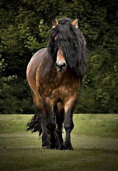 Beautiful Draft Horse.
