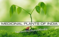 http://www.sanskritimagazine.com/ayurveda/medicinal-plants-of-india/