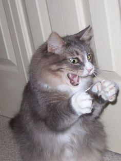 I like to throw QTips at my cat.