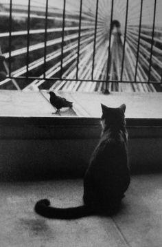 henri cartier-bresson • an attentive cat