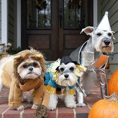 Cute Halloween costume. The wizard of oz