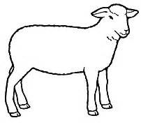 club show lambs clipart sheep 4 h clip art livestock showing rh pinterest com lamb clip art free lamb clipart images
