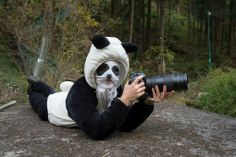 Photographer Ami Vitale wears a panda costume while she photographs giant pandas preparing to be released into the wild. Read more: Inside The (Not So) Secret World of Pandas - LightBox http://lightbox.time.com/2014/04/14/panda-photos-conservation-wild/#ixzz2zwlY1NMACourtesy