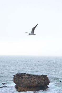 A seagull flies along the coast in Essaouira