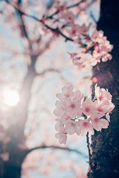 Quiero hacer contigo lo que la primavera hace con los cerezos.