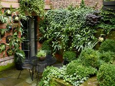 love the staghorn ferns! rh6 Townhouse Garden on West 11th Street - Projects - Sawyer | Berson