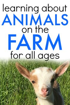 Learning about farm animals. Farm animals crafts for kids. Farm animals activities. Farm  animals printables. Farm learning activities. Preschool farming activities. Farm lesson plans. #farm #farming #farmanimals #animals #lessons #homeschool #teaching