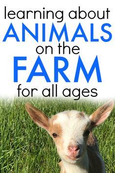 Learning about farm animals. Farm animals crafts for kids. Farm animals activities. Farm  animals printables. Farm learning activities. Preschool farming activities. Farm lesson plans. #farm #farming #farmanimals #animals #lessons #homeschool #teaching