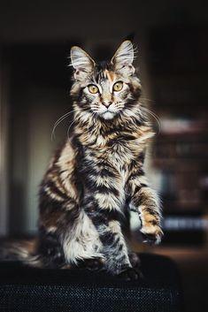 What a pretty cat!?
