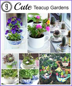 Turn old teacups into charming mini gardens! Here are a few ideas to get you started. These also make cute gifts! Camp Makery has a wonderful step by step tutorial on how to make these super cute mini teacup gardens. Teacup herb garden by The Brower Bird Stories Teacup planter pots via Go Make Me Succulents planted in a teacup by Kerry Michaels @ About. Com Container Garden Ideas Basil growing in a teacup via Creative Juice Cacti in teacups via Casos de Casa Pansies in teacups via My ...