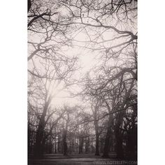 #art #spring #nature #park #springtime #happy #picoftheday #follow4follow #weekend #good #awesome #copenhagen #f4f #fairytale #followme #all_shots #instaphoto #followforfollow #composition #exposure #instagood #moments #imagine  #instalovers #love #model #instalike #morning #trees