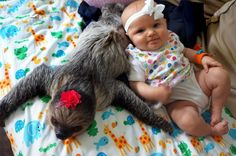 Meet baby Alia with her friend Daisy the sloth. | This 5-Month-Old Baby And A Sloth Have Been Best Friends Since Birth