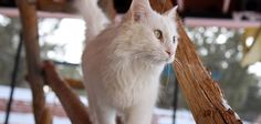 Cattery and Catio Information | Best Friends Animal Society