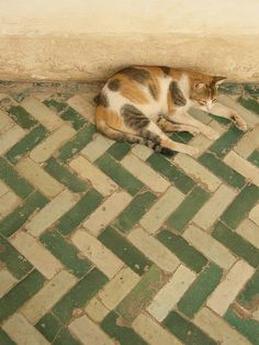 """""""Moroccan cat on Moroccan tile."""""""