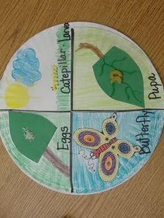 Have the kiddos get some compass practice by drawing a circle on a nice piece of artist's paper, then have them partition the circle, draw and label the stages of the life cycle, and add arrows.