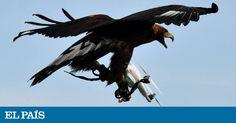 From hand-held copters that zoom around the living room to high-speed craft offering the sensation of flying over the countryside, drones have won over legions of fans—and are proving a growing challenge for security authorities. Bird Pictures, Cute Pictures, Drones, Bird Strike, Funny Accidents, Wedge Tailed Eagle, Perfectly Timed Photos, Rare Birds, Cute Creatures