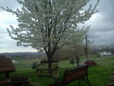 Carmichaels, Pa.  Our old property in Spring. Bradford Pear in full bloom. photo by Tammie Dunlap