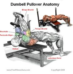 Dumbbell Pullover- Arnold used to do these when training for Mr Olympia. We'll see if my bad shoulder can handle the overhead motion. What could go wrong? :-)