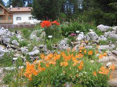 """Il Giardino Botanico Alpino """"Viotte""""di Monte Bondone (Trentubo-Alto Adige) è uno dei più antichi e più grandi Giardini Alpini Italiani. Fu fondato nel 1938 per promuovere la conoscenza e la salvaguardia della flora alpina. Fu scelta la piana delle Viotte, famosa per le sue praterie ricche di fiori. Un luogo ideale a 1500 metri di quota, ben esposto a sud e ricco di acque provenienti dalla vicina torbiera."""