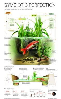 """Infographic: Rice-Paddy Aquaculture"" I've noticed that most permaculture farms and institutes use rice paddies. Aquaponics System, Aquaponics Diy, Aquaponics Greenhouse, Hydroponic Growing, Hydroponic Gardening, Gardening Apron, Vegetable Gardening, Diy Hydroponik, Rice Paddy"