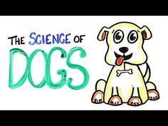 The Science of DOGS by asapscience: Time for the Science of DOGS!! Some amazing facts about man and woman's best friend :) —-References—-Genome Sequencing Highlights the Dynamic Early History of Dogs Smarter Than You Think: Renowned Canine Researcher Puts Dogs' Intelligence on Par with 2-Year-Old Human Seizure-alert dogs — fact or fiction? A dog's detection of low blood sugar: a case report Olfactory Detection of Prostate Cancer by Do