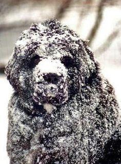 they love snow, seroiusly