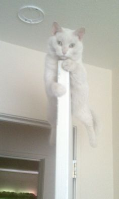 She likes to hang out on our doors