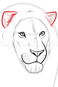 how to draw wildlife step by step