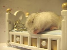 Hamster sleeping in a little bed.