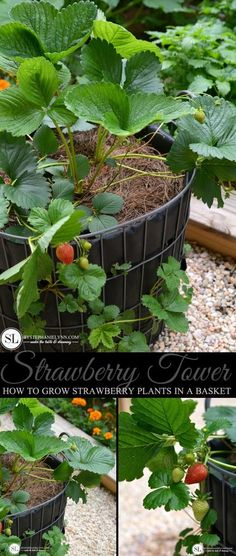 Strawberry Tower | H