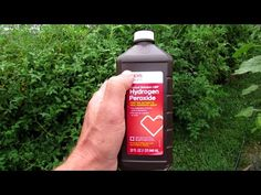 Complete Guide to Using Hydrogen Peroxide on Tomato Plants: Recipes, Maintenance, Outbreaks & Uses Of Hydrogen, Hydrogen Peroxide Uses, Ink Cartridge Reset, Faded Hair Color, Best Greenhouse, Thickening Shampoo, Permanent Hair Dye, Gardening Books, Vegetable Gardening