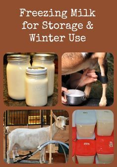 How to freeze excess milk for long term storage and use throughout the winter via Better Hens and Gardens Freezing Milk, Goat Milk Recipes, Raising Goats, Keeping Goats, Goat Care, Savon Soap, Conservation, Raw Milk, Milk And Cheese