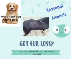 Alopecia in dogs, Fur loss in your dog,  Easy Steps for fur growth,  http://bulldogvitamins.blogspot.com/2017/02/alopecia-in-dogs-remedies-for-canine.html