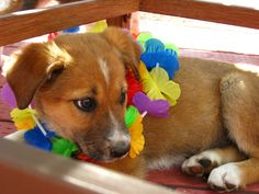 Lifeline Dog Rescue Colorado