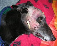 Petition to - Regulate Greyhound Racing in Ireland and Enforce the Welfare Act 2011