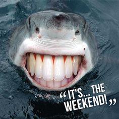 #weekend #scuba #sharks