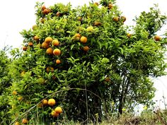 Vakre Sicilia – Roadtrip i 8 dager! I 8, Catania, Road Trip, Pumpkin, Outdoor, Outdoors, Road Trips, Pumpkins, Outdoor Living