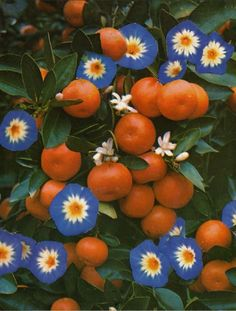 orange food aesthetic Mandarin Oranges (Collage by John Bohl) Plant Aesthetic, Orange Aesthetic, Aesthetic Collage, Nature Photography Flowers, Art Photography, Flowers Nature, Flowers Garden, Blue Flowers, Autumn Photography
