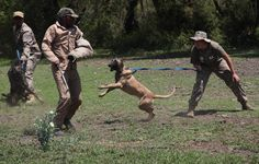 South African academy trains anti-poaching dogs - Yahoo News
