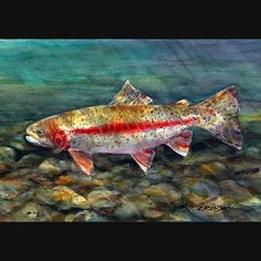 RAINBOW TROUT Watercolor Print by Dean Crouser on Etsy, $25.00