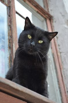 black cat on window sill