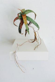 Aloe. Paper,wire, thread.