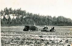 Lavoro nelle risaie negli anni '50. #Lomellina #storia #riso #mondine #tradizioni